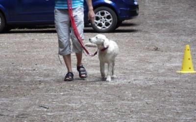 Hunde im Auto richtig sichern